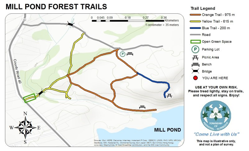 Mill Pond Forest Trails
