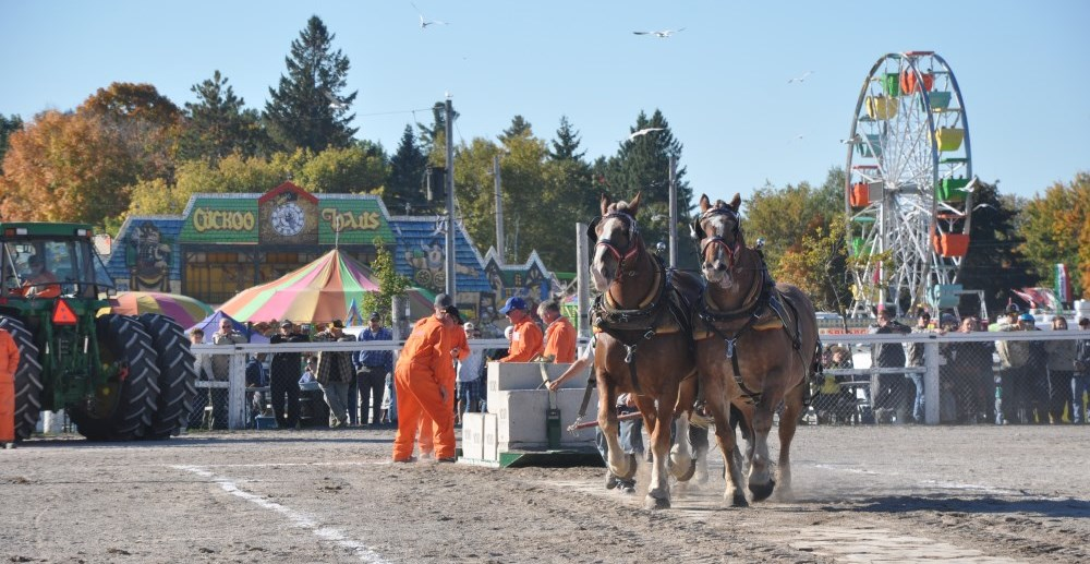 Norwood Fair Horses